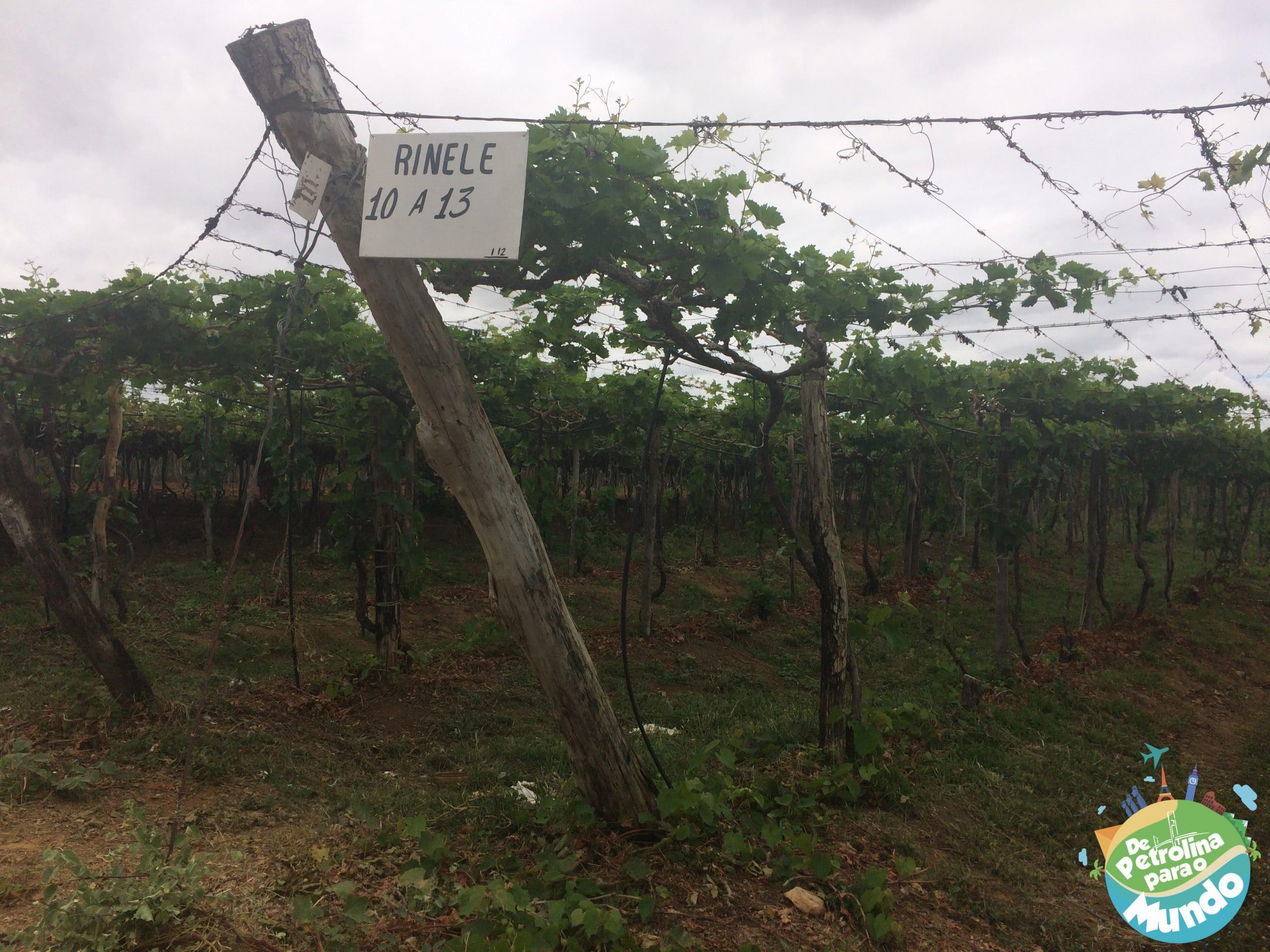 Associação de produtores de uva