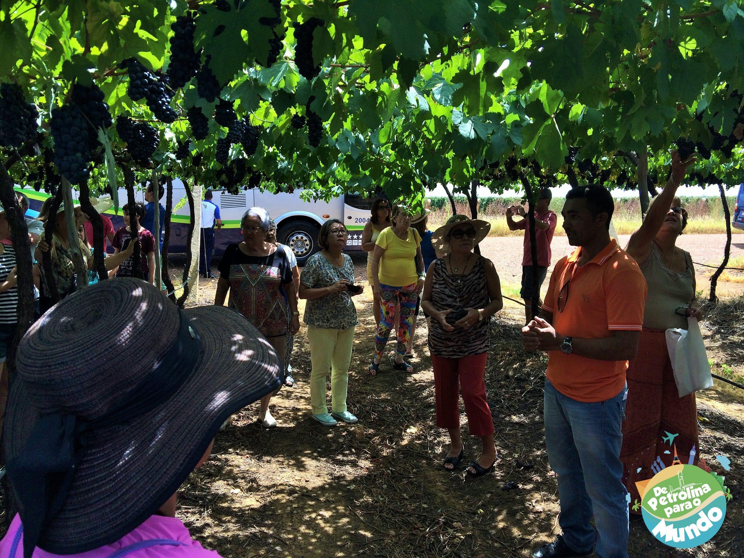 Conversa sobre plantação de uva